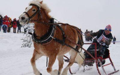 Pferdeschlittenrennen und Schneeschuhwanderungen