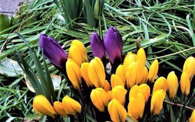 Nach dem Winter ist vor dem Frühling